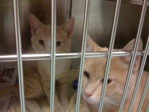 George and Fred at the shelter